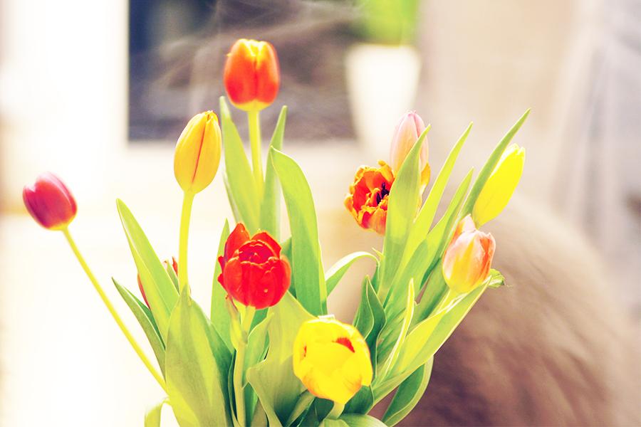 frühling-tulpen