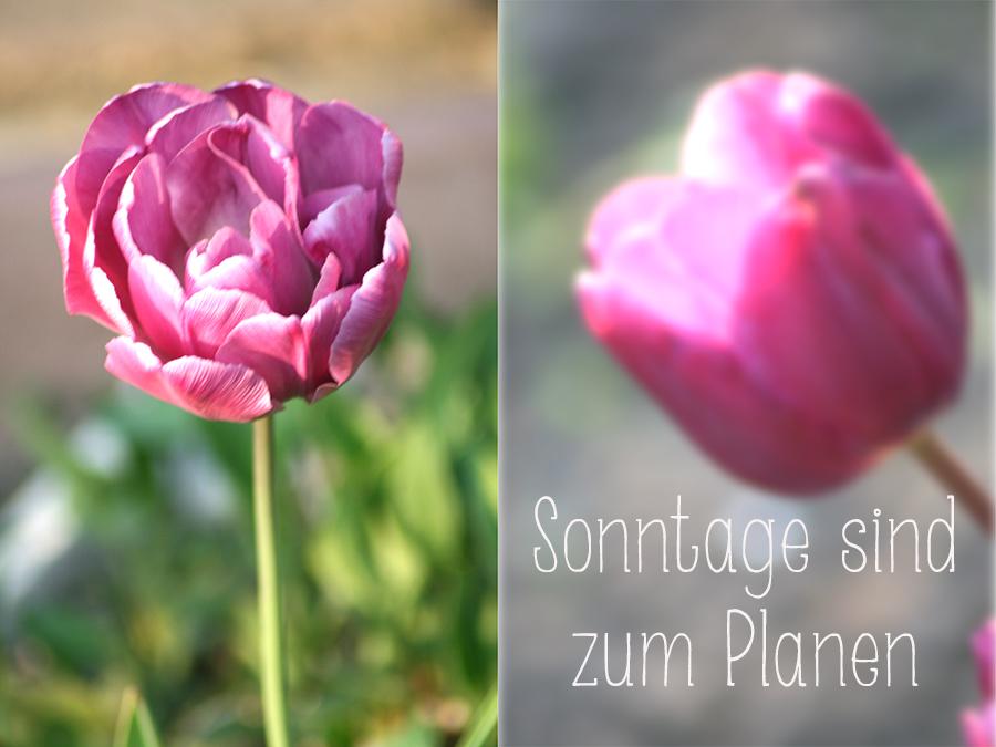 sonntage_sind_zum_planen