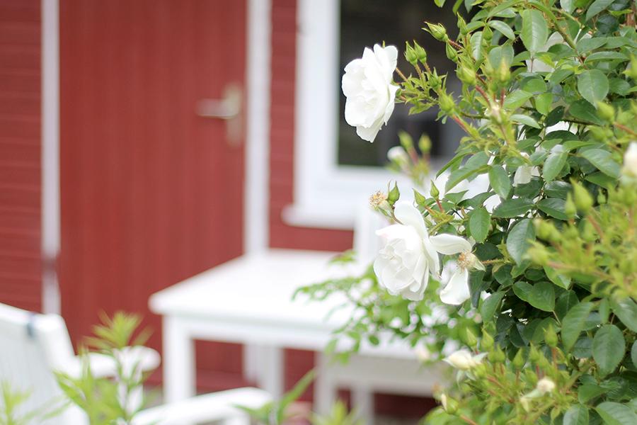 Sonntage-sind-Haus-Rosen