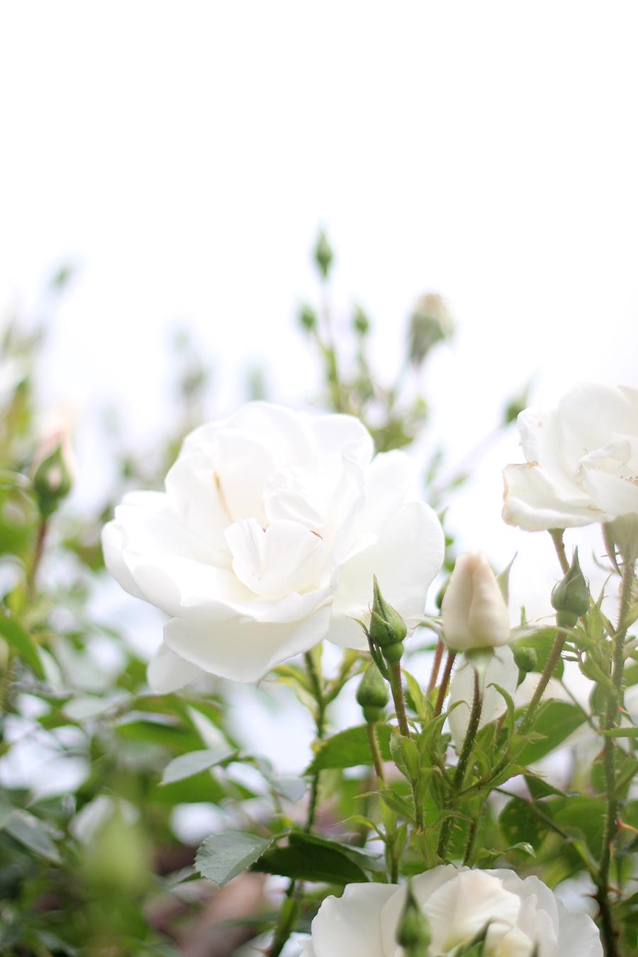 sonntage sind rosen rosegold marble. Black Bedroom Furniture Sets. Home Design Ideas
