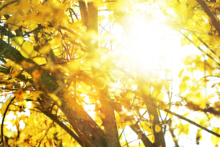Herbstspaziergang-2