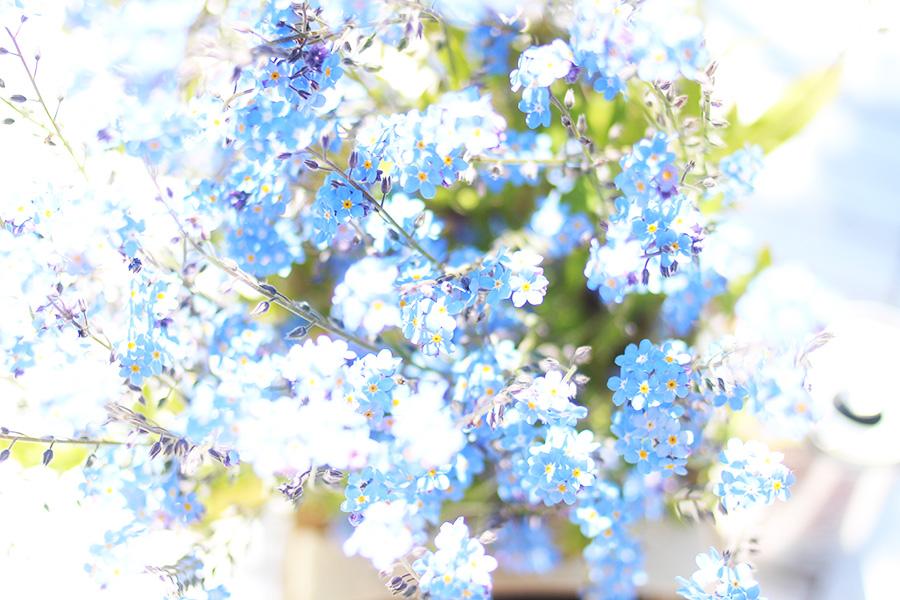 Sonntage-sind-Gartengedanken-3