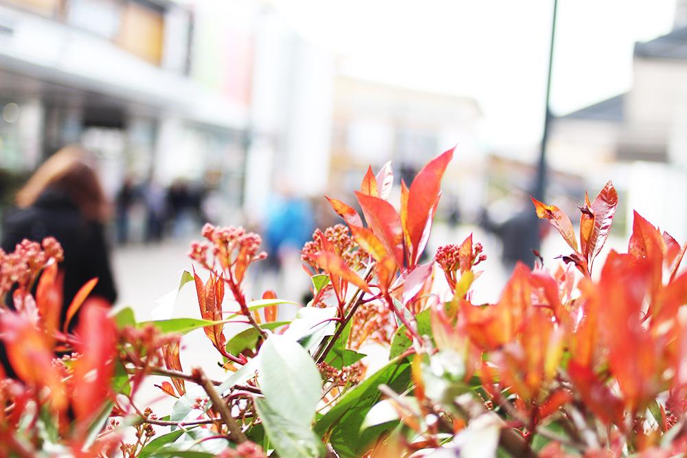 Sommernachtsshopping-Bad-driburg-Blumen