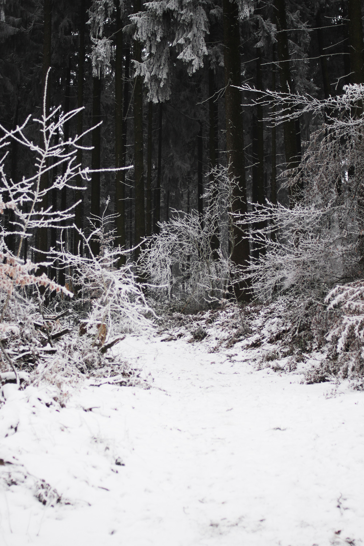 Winterwald Schnee Wochenrückblick Rosegold&Marble