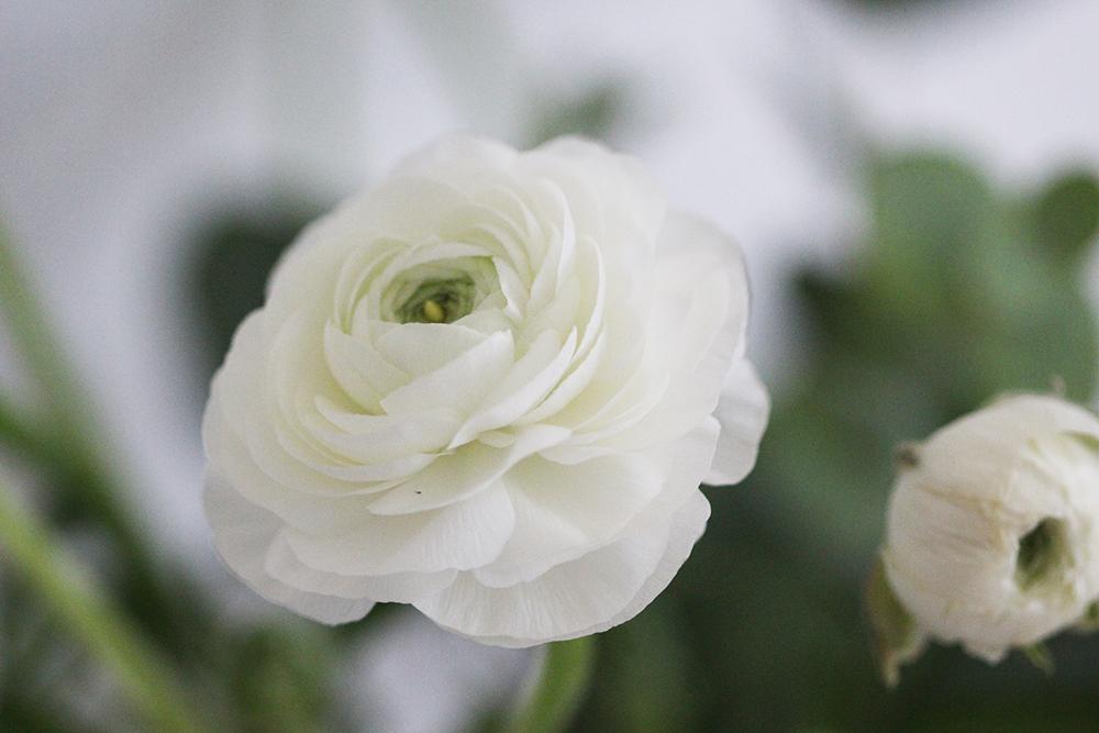 Wochenrückblick Blumen Ranunkeln