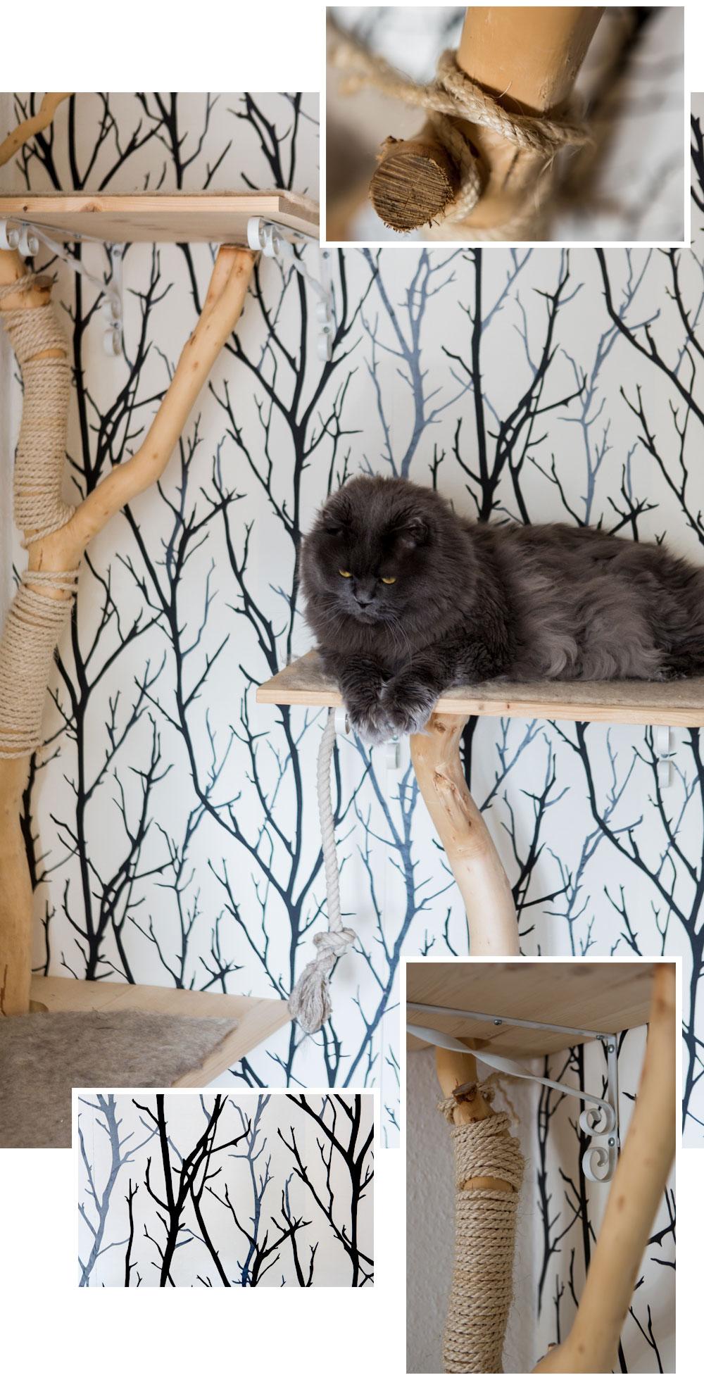 Wohnen Mit Katzen Kratzbaume Katzenmobel Und Katzenallergie