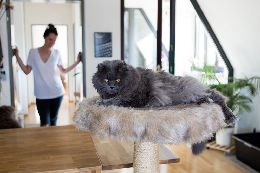 wohnen mit katzen kratzb ume katzenm bel und katzenallergie rosegold marble. Black Bedroom Furniture Sets. Home Design Ideas