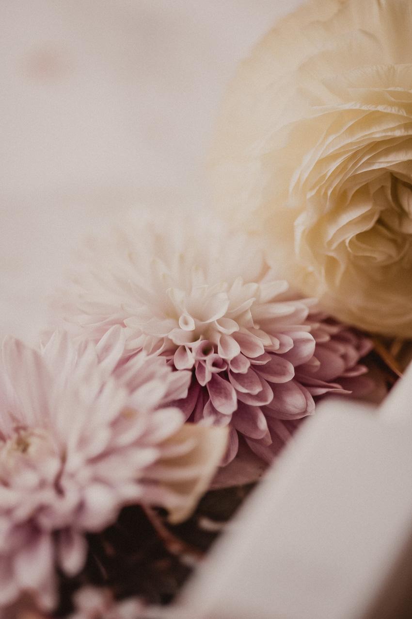 Blogger lieben Blumen: so machst du schöne Blogfotos