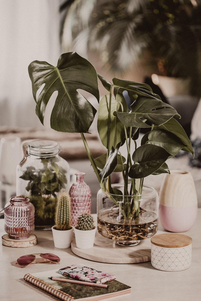 Water Plants - Dekorieren mit Pflanzen: Monstera, Kakteen und Kaffeepflanzen
