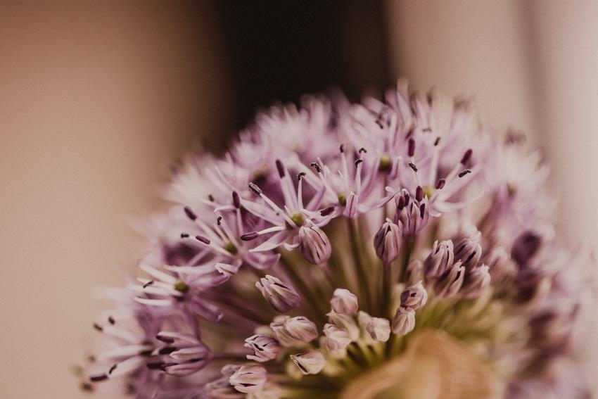 Schnittblumen im Winter Alium