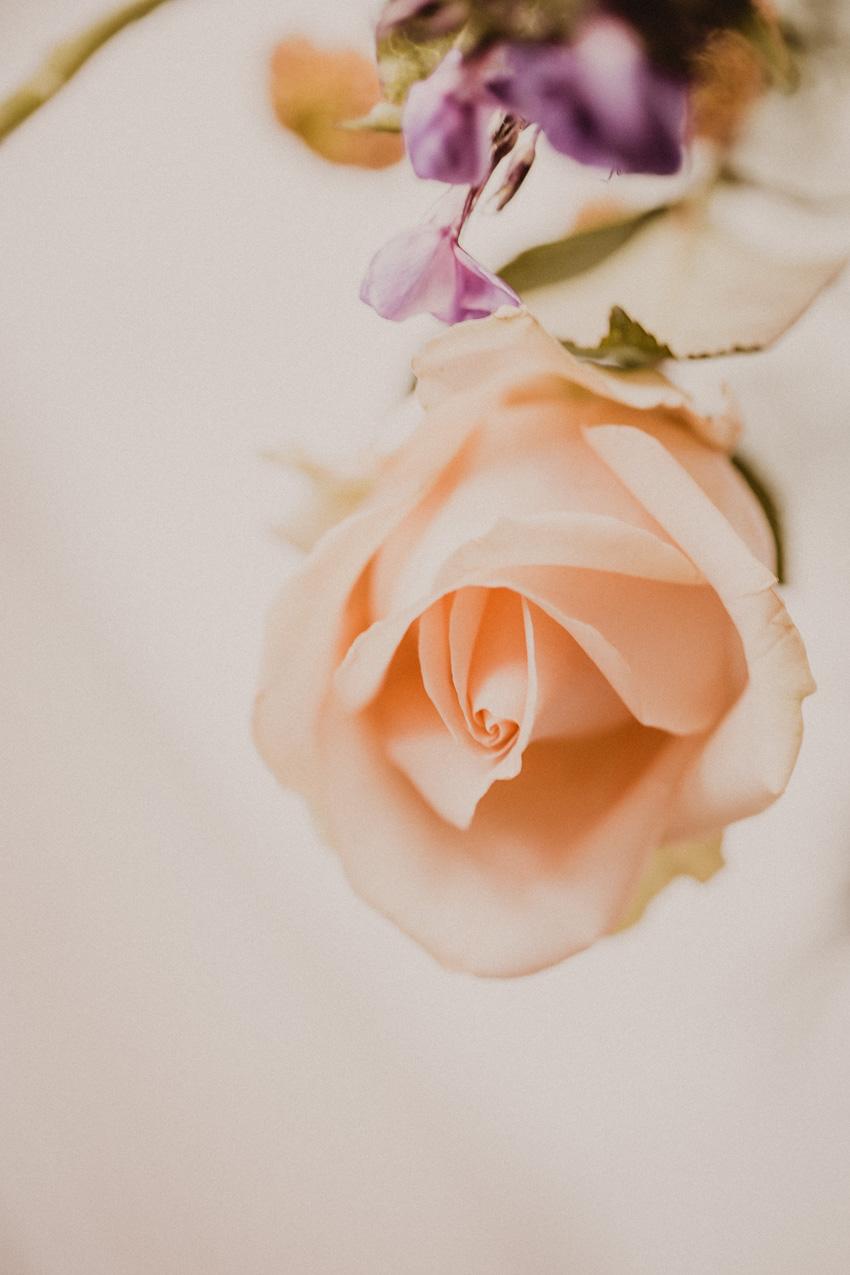 Cremefarbene Rose: Blogger lieben Schnittblumen